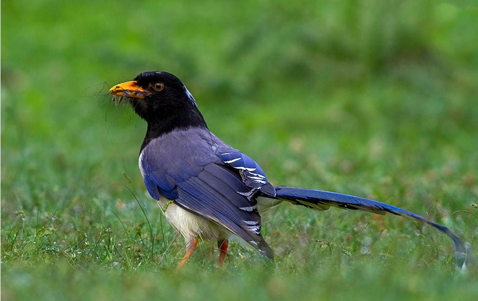 Bird Watching Trip