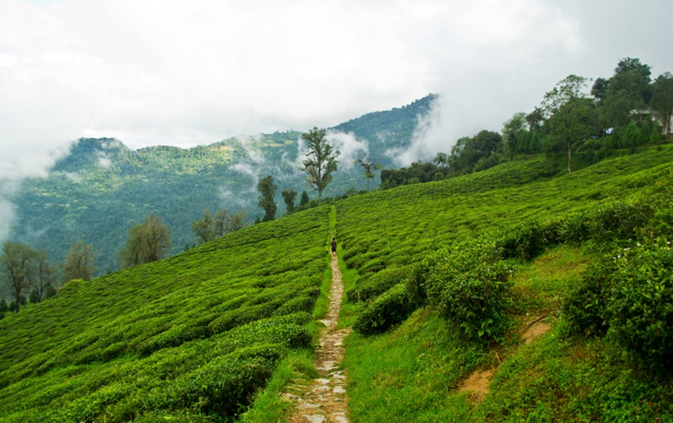 Sikkim / Darjeeling Package Tour II
