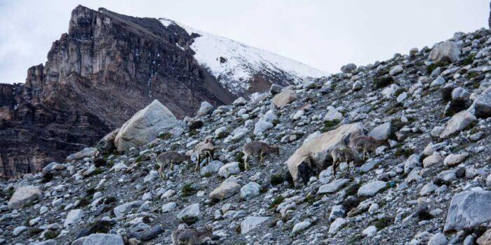 Everest Base Camp Elevation